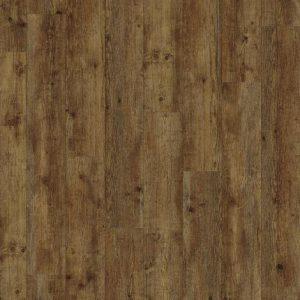 Maritime Pine 24854